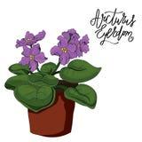 Violet flower in a pot royalty free illustration