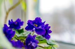 Violet flower room Stock Images