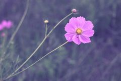 Violet flower surrounded by grass in the middle of the field stock photography