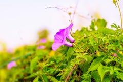 Violet flower. stock images