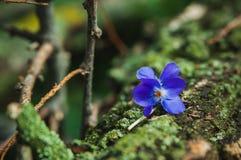 Violet flower on the tree bark Stock Image