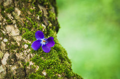 Violet flower on the tree bark Royalty Free Stock Photos