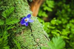 Violet flower on the tree bark Stock Images