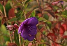 Violet Flower imágenes de archivo libres de regalías