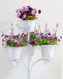 Violet flower in white four flower pots decoration. Stock Photos