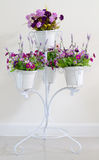 Violet flower in white four flower pots at stand for decoration. Royalty Free Stock Image