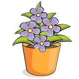 Violet flowers Royalty Free Stock Image