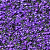 Violet Flowers. Seamless Texture Tile from Photographic Original royalty free stock photo