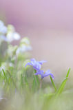 Violet flowers. Stock Photography