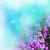 Violet flowers on abstract background Stock Photos