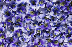 Violet Flowers For Background. Image stock