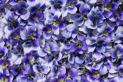 Violet Flowers For Background. Imagen de archivo
