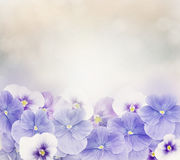 Violet Flowers Background Stock Photo