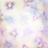Violet Flowers Background Stock Image