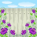 Violet flowers on a background a wooden fence Stock Images