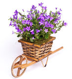 Violet flowers in basket Royalty Free Stock Photo