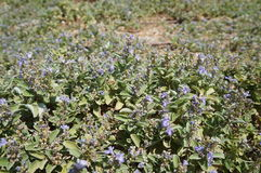 Violet flowers blossom. Fresh background Stock Photos