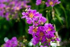 Violet flowers Stock Image
