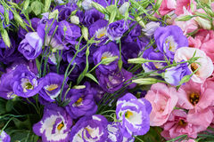 Violet and flowers Royalty Free Stock Photography