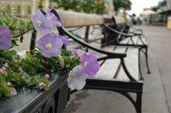 Violet flowers Stock Photos