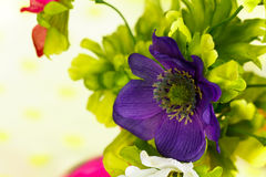 Violet Flowers Close Up Shot Royalty Free Stock Photo