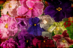 Violet flowers colorful background grunge Stock Photography