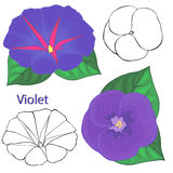 Violet flowers. contours of flowers Royalty Free Stock Photos