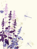 Violet flowers and dragonfly Royalty Free Stock Photo
