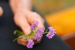 Violet flowers in elderly hands Stock Photo