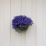 Violet flowers in flowerpot Stock Photo