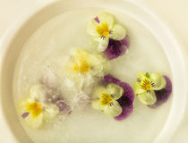 Violet flowers in frozen water Royalty Free Stock Photos