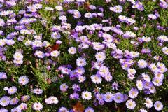Violet flowers. In garden Stock Photo