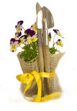 Violet flowers with garden equipment Stock Photo