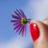 Violet flowers in the garden/red nails. This image shows a garden with some violet flower against a blue sky Royalty Free Stock Photos