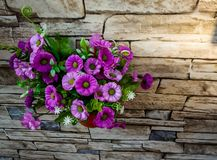 violet flowers in a green flower pot attached to the stone cladding wall with texture stock image