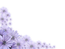 Violet Flowers Greeting Card Stock Photography