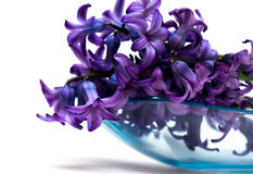Violet flowers isolated Stock Photos