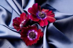 Violet flowers lie on a blue shiny silk wavy fabric. Stock Photography