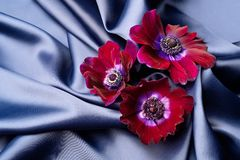 Violet flowers lie on a blue shiny silk wavy fabric. stock photos