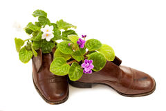 Violet flowers in old boots on white background. Violet flowers in old dirty boots on white background Stock Image