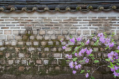 Violet flowers and old stone wall Royalty Free Stock Photo