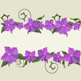 Violet flowers and ornate frame background. Stock Image