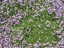 Violet flowers pattern Stock Image