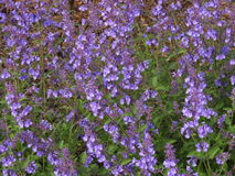 Violet  flowers pattern Stock Photo