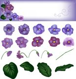 Violet flowers with round leaves, a card with design from flowers Stock Images