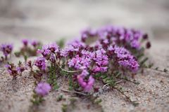 Violet flowers on sand Stock Photos