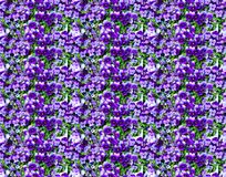 Violet Flowers Seamless Pattern Photo Background Royalty Free Stock Images