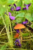Violet flowers and small Esculentus mushrooms Stock Photo