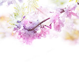 Violet flowers soft style with vintage filter effect. Spring violet flowers soft style with vintage filter effect. Floral design background Stock Photos