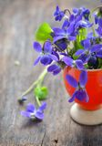 Violet flowers of spring on weeden table Royalty Free Stock Images